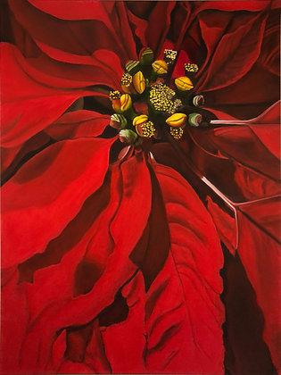 Poinsettia, 2001