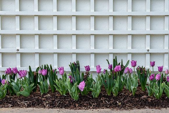 Spring in the Garden, 2018