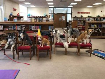 Dogs in School, Therapy dogs, dog training in public