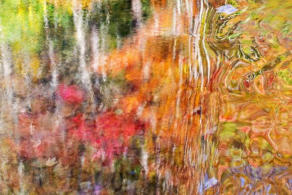 Fall Reflections, 2017