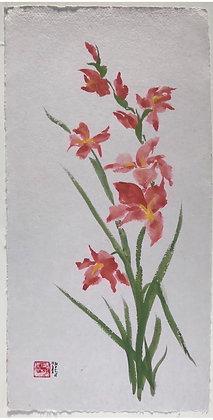 Gladiolus, 2017
