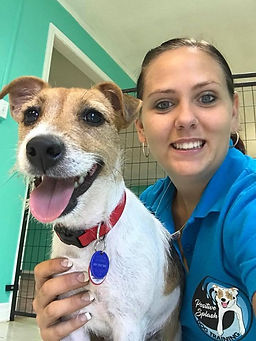 Jack Russell Terrier, Dog Trainer, Smiles