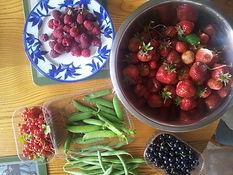 Hayfield Community Garden Produce