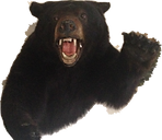 Black Bear Outfitters