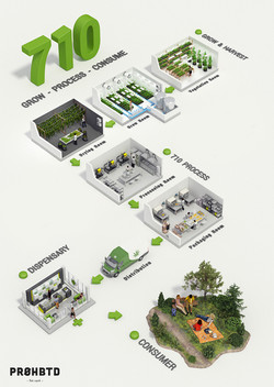 Cannabis_710process_Infographic