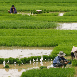 The Truth About the Global Rice Industry
