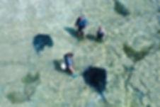 Singray-feeding-Tatapouri-Bay-Gisborne-4