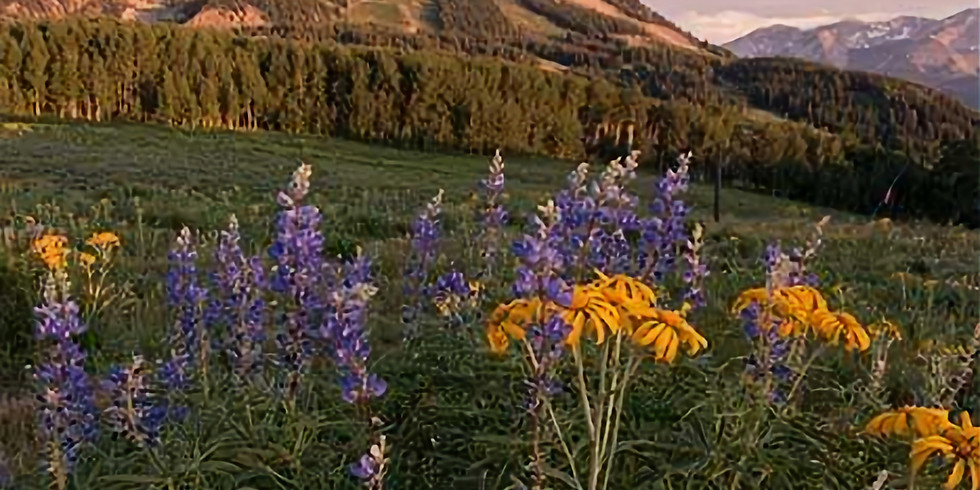 Crested Butte- Writing & Photography with Cayla