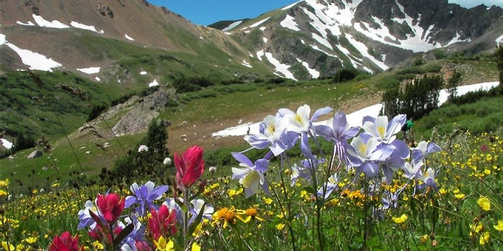 Denver/Idaho Springs Herman's Gulch Hike