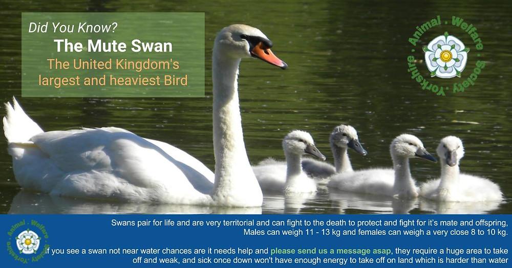 Swan post title information