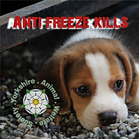 Anti freeze kills smaller image.jpg