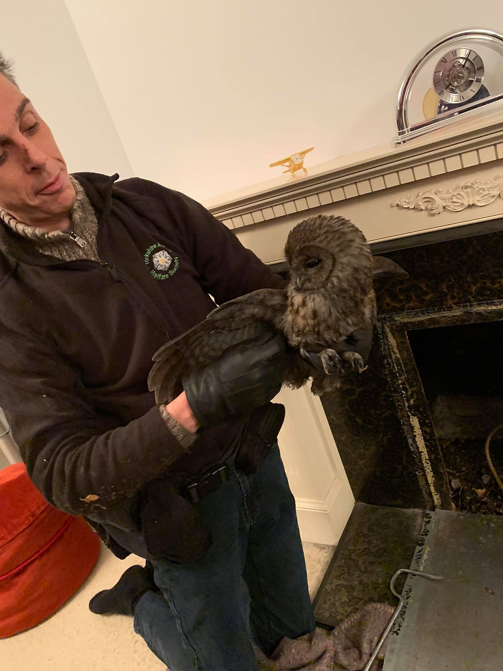 Tawny owl rescued from a chimney jan 2019
