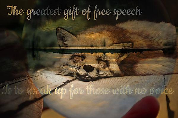 speak up for animals - Fox.jpg