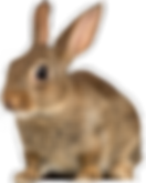 rabbit-png T-B-30.png