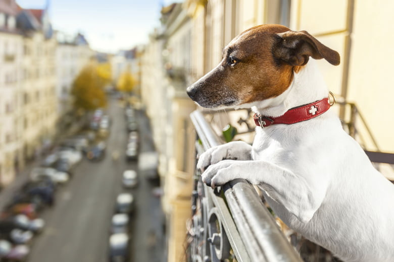 JRT Dog in the city