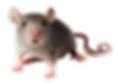 rat_mouse_PNG23537.png