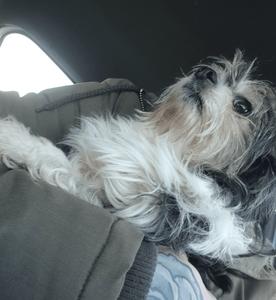 Little dog found in Denholme