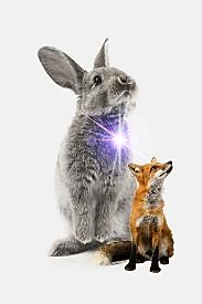 Rabbit and fox Photofox3.png