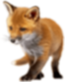 Baby_Fox_PNG_Clip_Art-2277 (1)comp.png