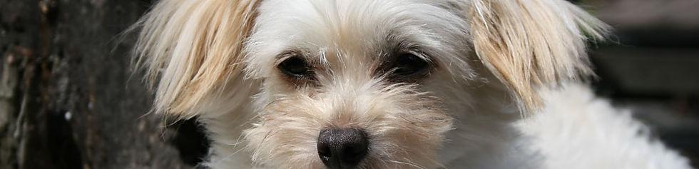 Mimi dog front 280kb 0818.jpg