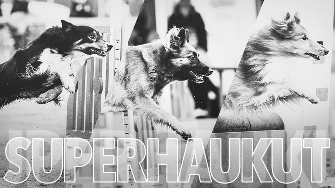 SuperHAUkut 2.9.