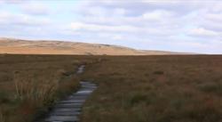 Britain's Hills Management