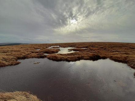peat landscape.jpg
