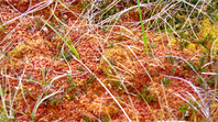Alternative futures for UK peatlands
