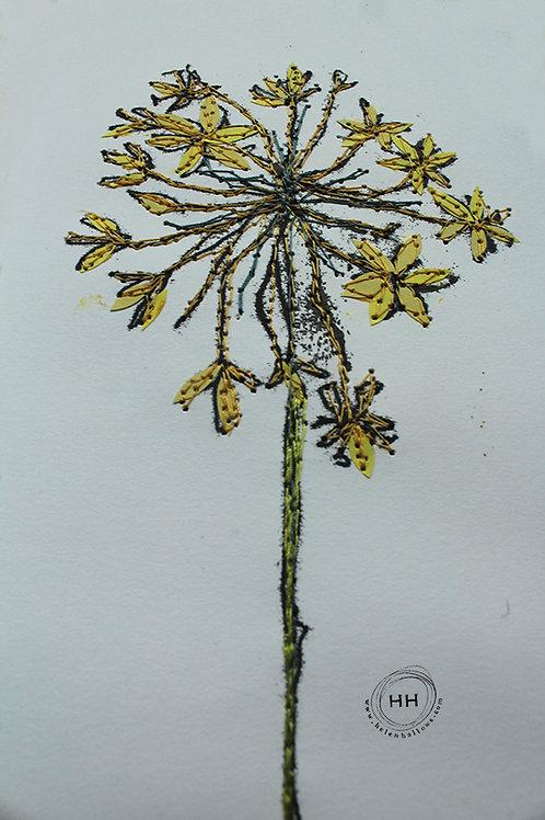 Allium and Saxifraga - Original