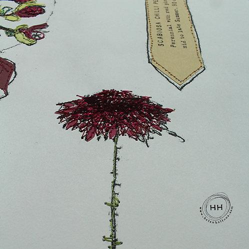 Euphorbia and Scabiosa - Original