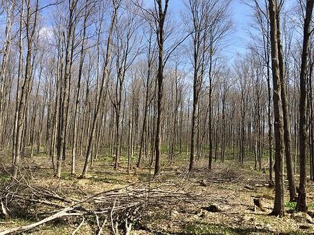 Tree Marking