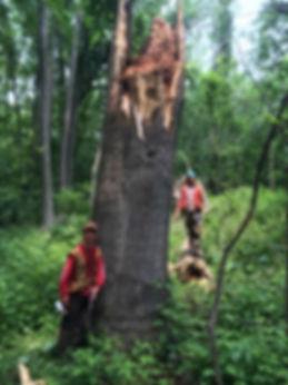 timber cruising
