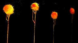 24x48 sunflowert1 sold