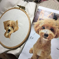 Looking good, this cute maltipoo, as sti