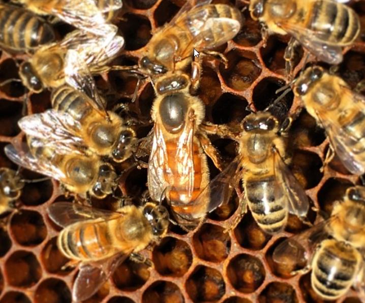 Arıların yuvası