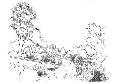 les-lianes-grimpantes-dessin-jardin-naturel.jpg
