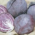 Cabbage Ruby Ball.jpg