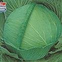 Cabbage OS Cross.jpg