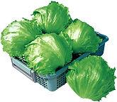 Lettuce Legacy.jpg