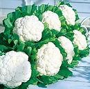 Cauliflower Snow Crown.jpg