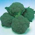 Broccoli Green Parasol.jpg