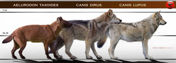 aelurodon_dirus_wolf.jpg