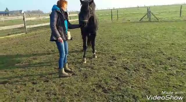 Sophie et son cheval  El Belem ibn khalil - étalon pur sang arabe 2ème séance découverte du clicker Politesse/pousser les hanches/ début de l'immobilité