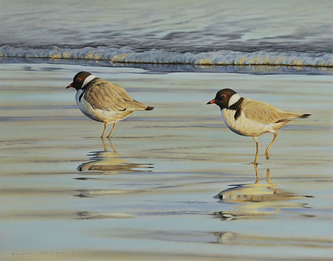 Hooded Plovers Card