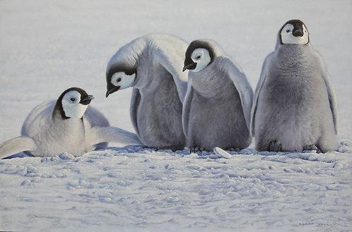 Emperor Penguin Chicks I