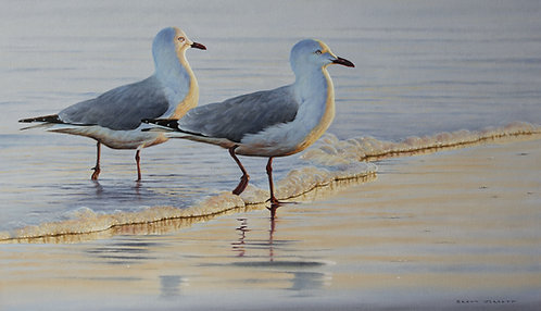 'Tide Line' Silver Gulls