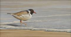 Hooded plover 25 x 18 cm birds.JPG