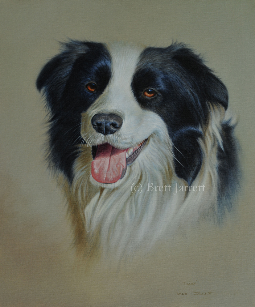 'Tilly' Border Collie