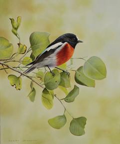 Scarlet Robin 25 x 32 cm birds.JPG