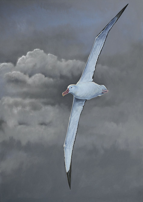 'Southern Ocean Wanderer' Wandering Albatross